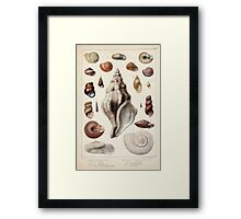 Proceedings of the Zoological Society of London 1848 - 1860 V5 Mollusca 009 Framed Print