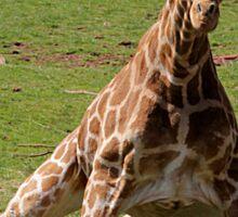 Giraffercise Sticker