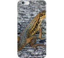 Lizard on Concrete iPhone Case/Skin