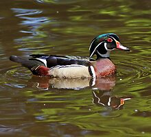 Wood Duck by Sandy Keeton