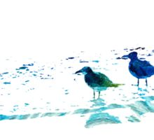 Seagull Art - On The Shore - By Sharon Cummings Sticker
