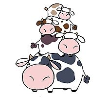Cow Stack Photographic Print