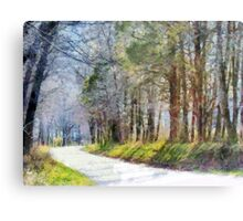 Country Road Through Forest Metal Print
