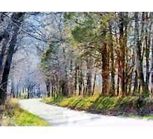 Country Road Through Forest Photographic Print