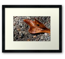 Tough As....... Framed Print