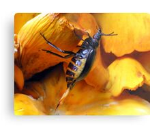 Beetle With Ovipositor Metal Print