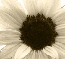 sunflower 3 Sticker