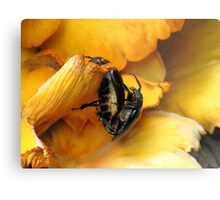 Prionus Laticollis Mating Metal Print