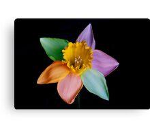 Colourful daffodil Canvas Print