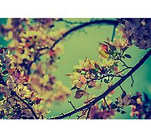 Bloomin' Photographic Print