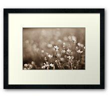 Sepia Buttercups Framed Print