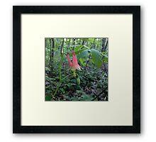 Belle Fleur Framed Print