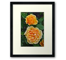 Two orange roses Framed Print