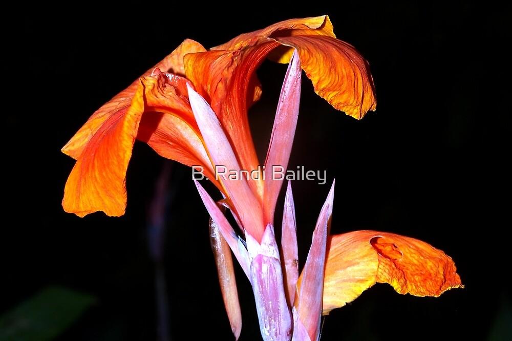 Brilliant orange canna lily by ♥⊱ B. Randi Bailey