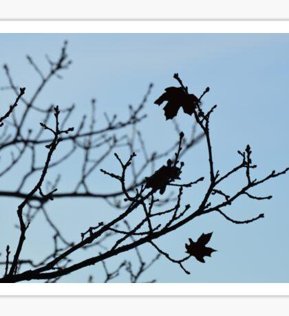 Last leaves Sticker