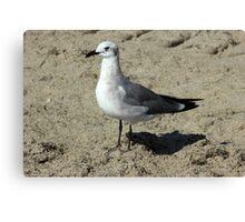 Gull on Sand Canvas Print