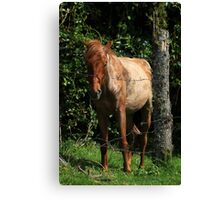 Brown Horse Next to a Fence Canvas Print