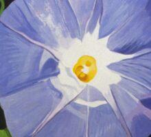 Blue Morning Glory Sticker
