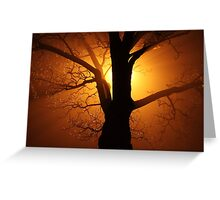 Abstract Sunset with Tree  Beautiful Nature Greeting Card