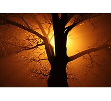 Abstract Sunset with Tree  Beautiful Nature Photographic Print