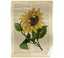 Botanical print, on old book page - flowers- Sunflower  Poster