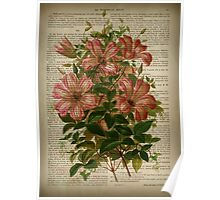 Botanical print, on old book page - flowers- Pink Lily Poster