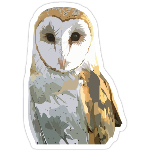 Barn Owl by Adamzworld