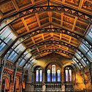 Natural History Museum by wendywoo1972