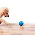 chasing the ball by wendywoo1972