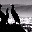 Cormorants in silhouette by iamelmana
