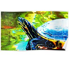 Colorful Turtle by Sharon Cummings Poster