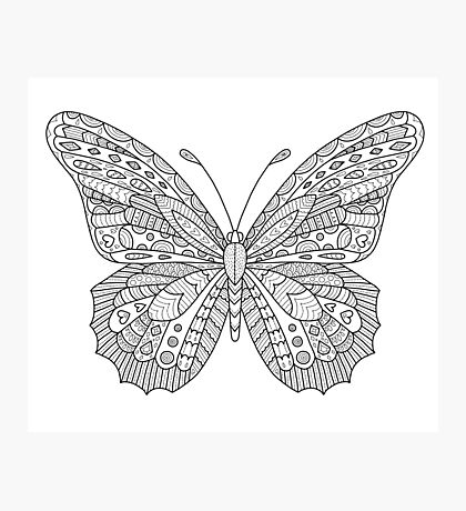 Pattered Butterfly Photographic Print