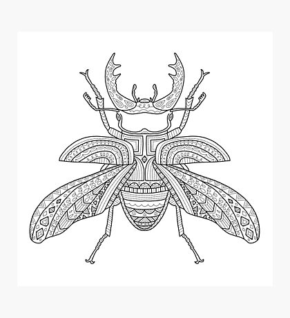 Patterned Stag Beetle Photographic Print