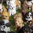 Puppy Love by Steve