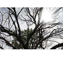Sun through a Tree Photographic Print