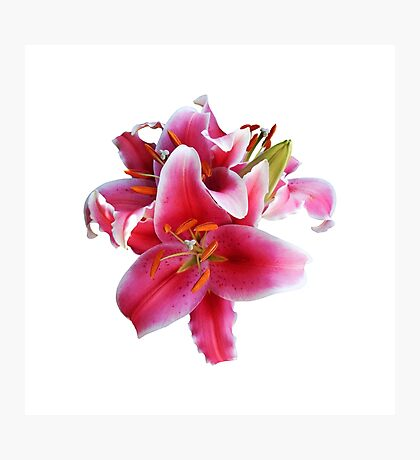 Cluster of Stargazer Lilies Photographic Print