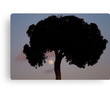 Lone Tree And Rising Moon Canvas Print