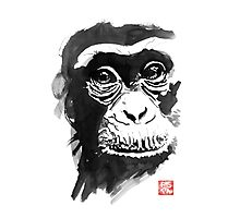 chimpanze Photographic Print