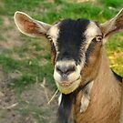 billy the goat by Stephen Frost