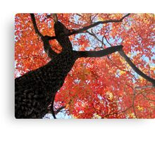 Black Gum Tree Metal Print