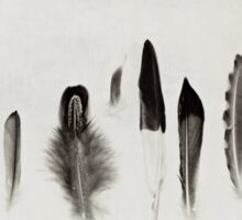 Feather Study no. 3 Sticker