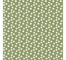 Elderflowers on green Photographic Print