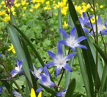Woodland Beauties by herbspics