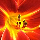 Flaming Lily by Shulie1