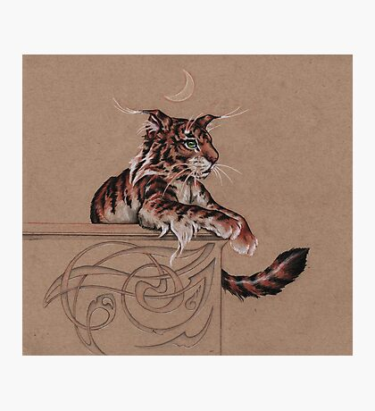 Fairy Tiger - all about the ear tufts Photographic Print