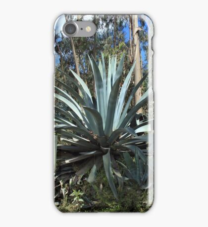 Aloe Vera Plant Next to a Road iPhone Case/Skin