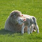 one small step for a lamb by Stephen Frost