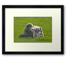 one small step for a lamb Framed Print