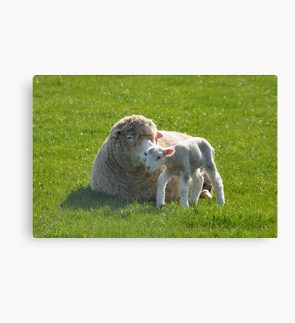 one small step for a lamb Canvas Print
