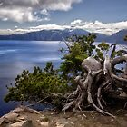 Trees on the Rim - Crater Lake National Park by Kathy Weaver